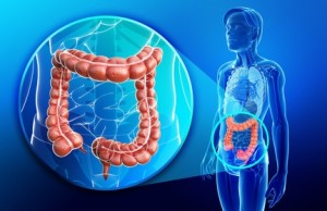 Illustration of female large intestine anatomy